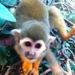 monkey zoo